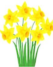 daffodil mug.jpg